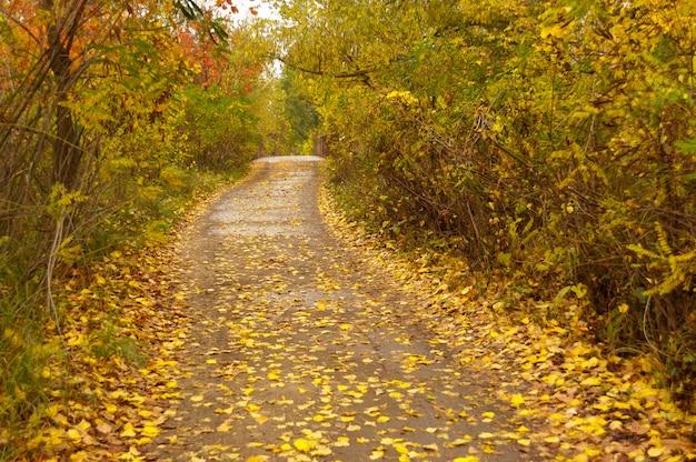 Outono dourado no parque, estrada coberta com folhas