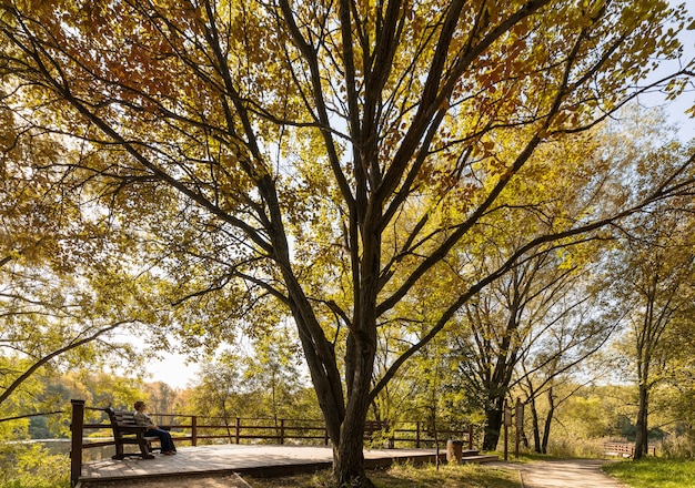 Outono dourado no parque serebryany bor na rússia de moscou