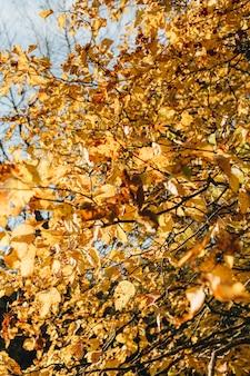 Outono e composição de outono. bela paisagem com folhas amarelas e laranja em dia de sol