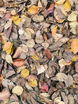 Outono e composição de outono. folhas coloridas amarelas cinza