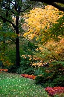 Outono, em, parque central, em, manhattan, cidade nova iorque, eua