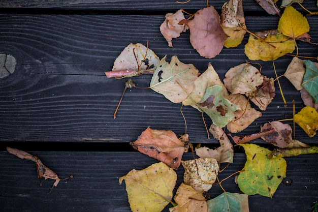 Outono em uma linda mesa de madeira