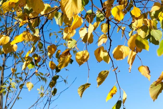 Outono ensolarado ou nublado com árvores que mudam a cor da folhagem, parque