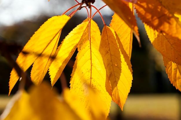 Outono ensolarado ou nublado com árvores que mudam a cor da folhagem