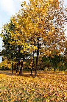 Outono europeu em um parque da cidade com árvores mudando de cor, estações específicas e especiais