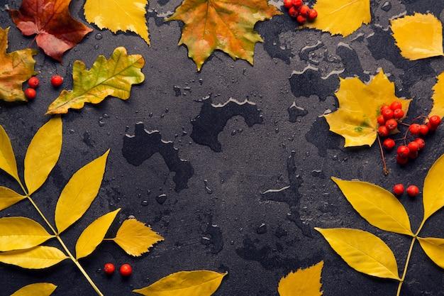Outono folha colorida depois da chuva