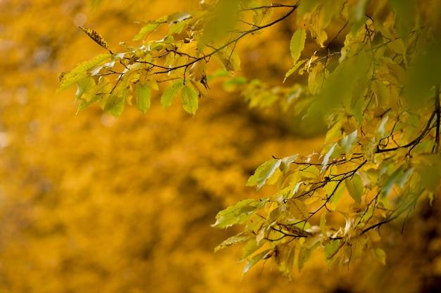 Outono folhas de outono fundo de um galho de árvore com folhas de outono em uma paisagem de fundo desfocado em ...