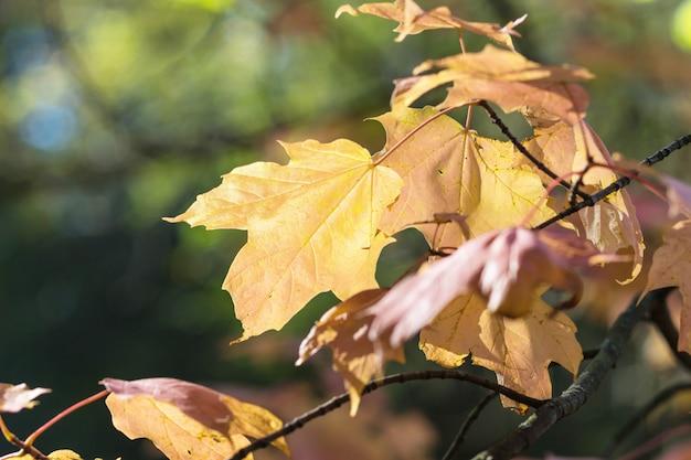 Outono folhas de plátano no jardim botânico