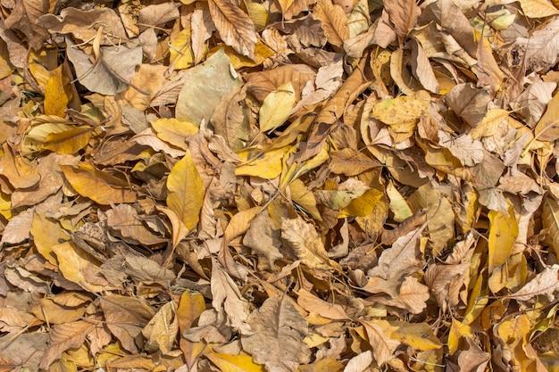 Outono folhas na grama verde