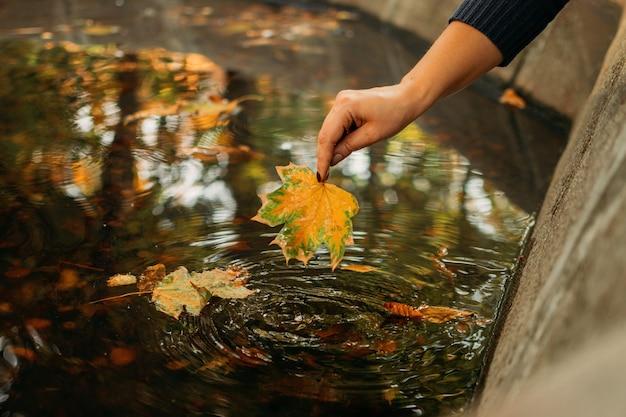 Outono fundo, outono, está chegando olá, outono, coisas que estão por vir.