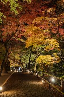 Outono jardim japonês com árvores de bordo à noite em kyoto, japão