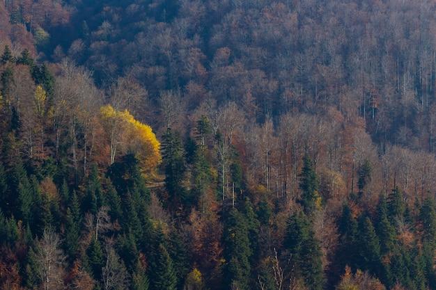 Outono na floresta na montanha medvednica em zagreb, croácia