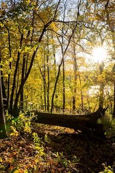Outono na floresta sobre uma árvore caída com o pôr do sol.
