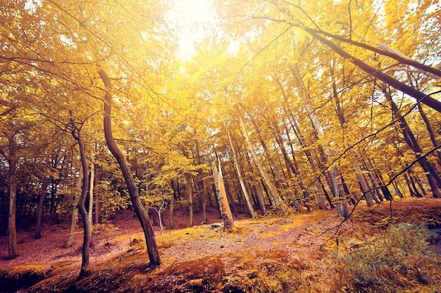 Outono na floresta.