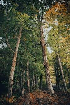 Outono na montanha