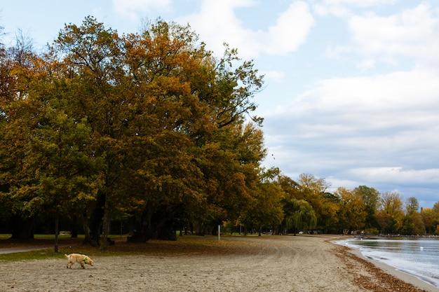 Outono na suíça, belo parque da cidade perto do lago