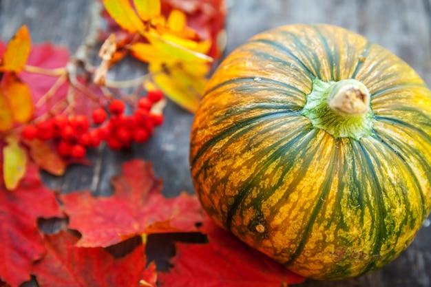 Outono natural outono vista abóbora e maple folhas em fundo de madeira