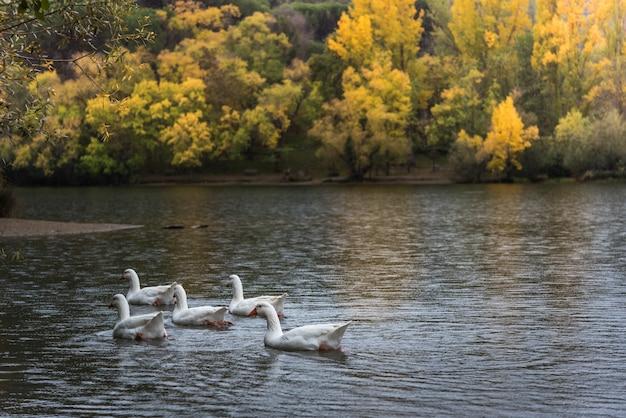 Outono no lago