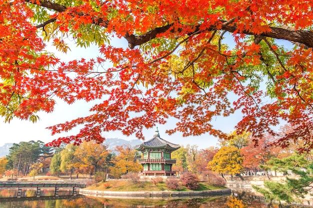 Outono no palácio gyeongbukgung, coreia.