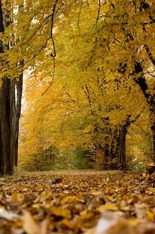 Outono no parque. bela paisagem de natureza calma de outono. conceito de beleza da natureza outonal.