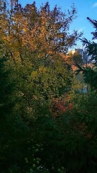 Outono no parque da cidade