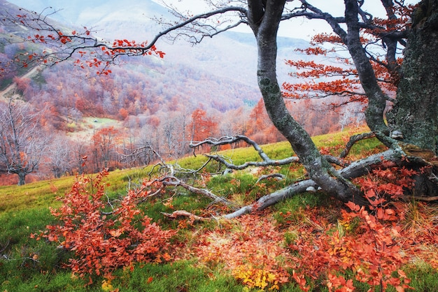 Outono nos cárpatos. vistas fantásticas em outubro.