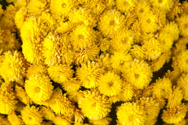 Outono ou outono fundo floral