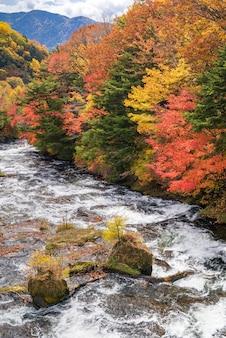 Outono outono floresta nikko japão