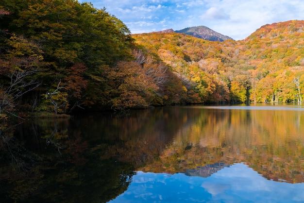 Outono outono lago japão