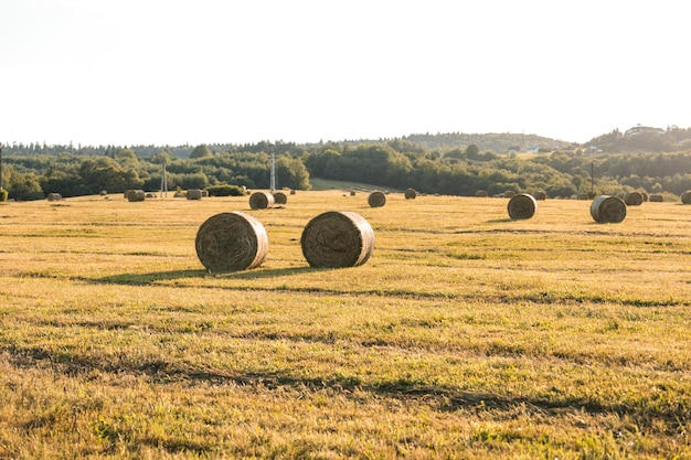 Outono, paisagem, com, hays, campo