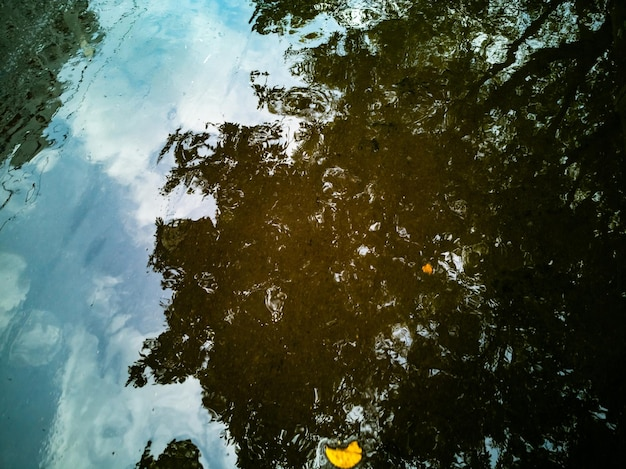 Outono paisagem de fundo outono árvore é refletida em uma poça após chuva folhas amarelas caídas mentem