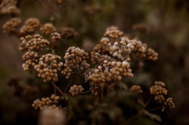 Outono plantas sazonais bege secas no parque. estilo boho de juncos secos.