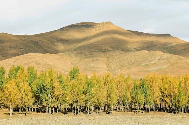 Outono, vista, de, árvores, e, montanha