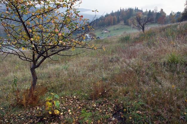 Outono vista para a montanha com macieira na frente