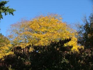 Outono - westonbirt