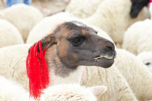 Ovelha com ornamento vermelho