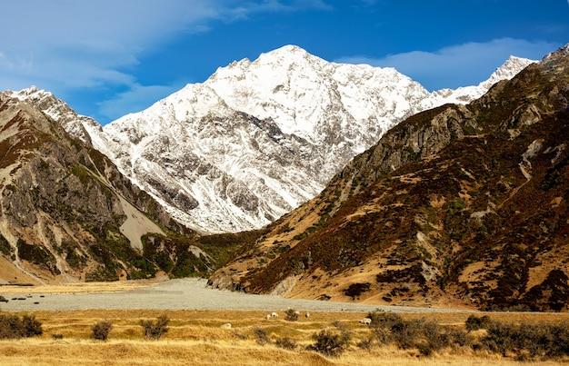Ovelhas pastando no sopé dos picos cobertos de neve dos alpes do sul