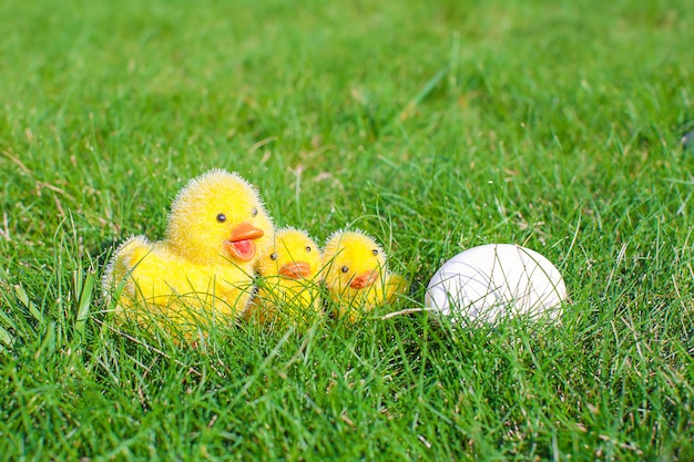 Ovo branco na grama verde e galinhas closeup
