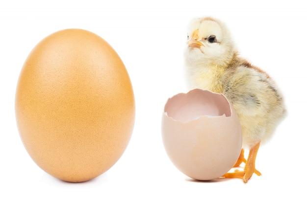 Ovo de galinha em branco