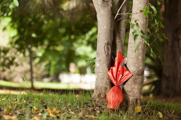 Ovo de páscoas brasileiras, embrulhado em papel vermelho debaixo de uma árvore