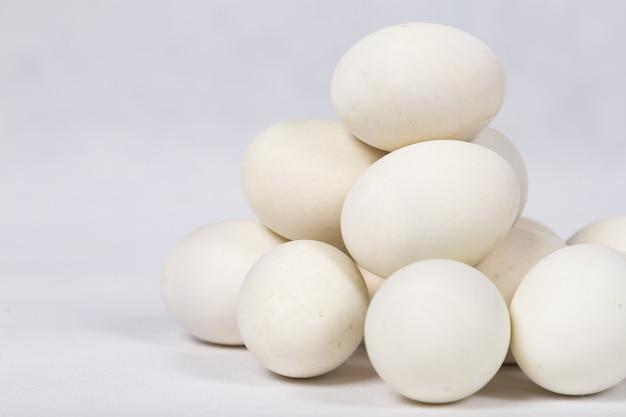 Ovo de pato em fundo branco