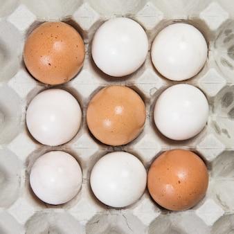 Ovo em uma caixa de ovos no fundo branco