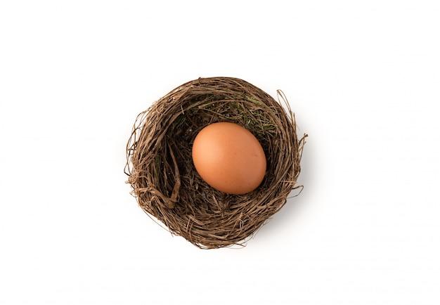Ovo no ninho do pássaro no branco isolado