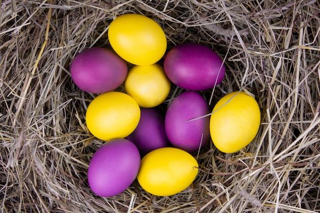 Ovos amarelos e roxos em uma vista superior do ninho. páscoa do conceito.