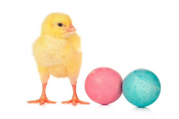 Ovos coloridos de páscoa e frango pequeno bonito isolado no branco