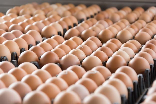Ovos da fazenda de frango no pacote