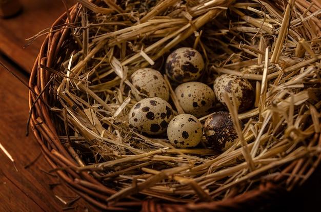 Ovos de codorna em um ninho feito de feno e cesta de vime