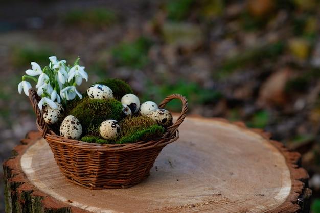 Ovos de codorna em uma cesta em um musgo verde natural com flores snowdrop no tronco de uma árvore.