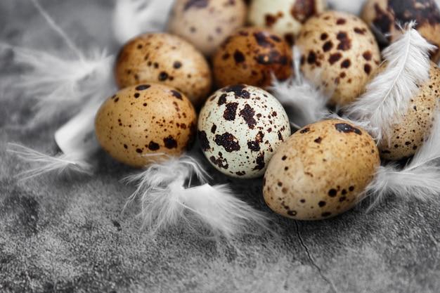 Ovos de codorna frescos pequenos e penas