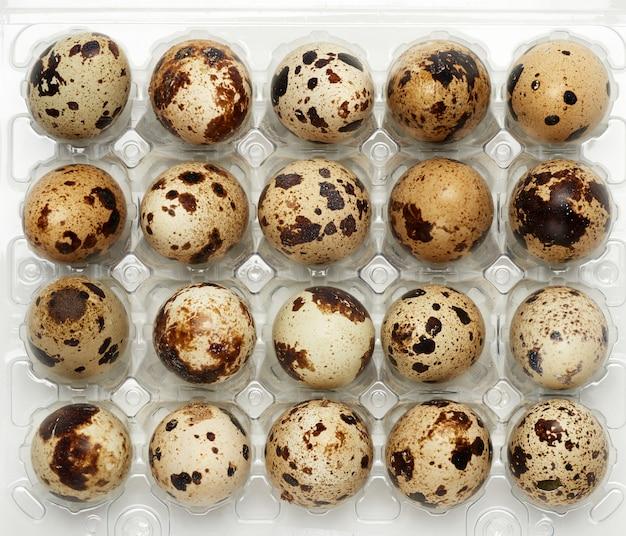 Ovos de codorna inteiro cru em uma bandeja plástica, vista superior